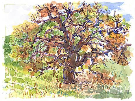 Judith Kunzle - California Oak in Winter