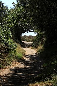 California Path by Judy C Moses
