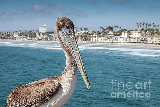 California Pelican by John Wadleigh