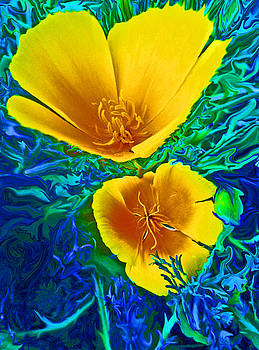 California Poppies by Daniele Smith