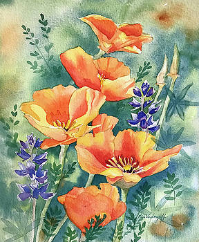 California Poppies in Bloom by Hilda Vandergriff