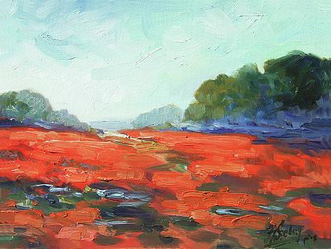 California poppies by Irek Szelag