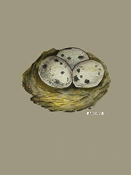 California Quail Eggs in Nest by Ahonu
