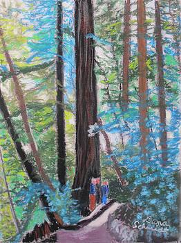 California Redwoods Near San Jose by Dana Schmidt