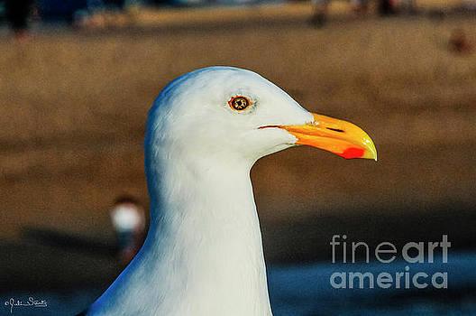 Julian Starks - California Sea Gull #1