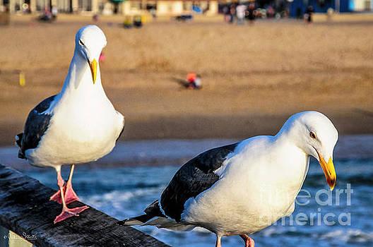 Julian Starks - California Sea Gulls