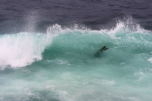 Robin Street-Morris - California Sea Lion Catches a Wave
