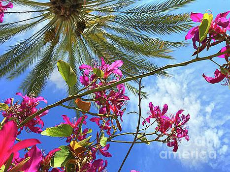 California Spring by Kasia Bitner