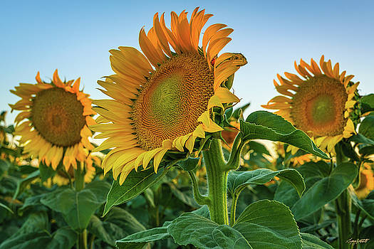 California Sunshine by Greg Mitchell Photography