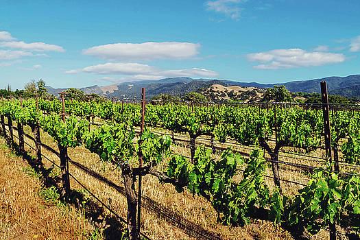 California Vineyard by April Reppucci