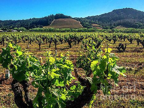 California Vineyards by Thomas Levine