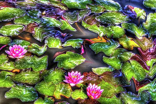 California Waterlilies by Nadine Berg