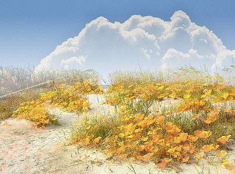 Californian Poppies In The Sand Montage by Clive Littin