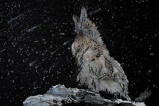 Call of the Wild by Ana Bikic