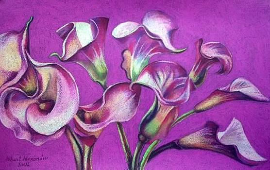 Calla Flowers by Chifan Catalin  Alexandru