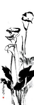 Nadja Van Ghelue - Calla Lilies - Beauty And Innocence In Black And White