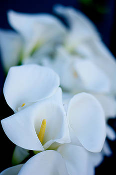 Newnow Photography By Vera Cepic - Calla lilly flowers