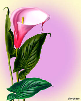 Calla Lily by Anthony Seeker
