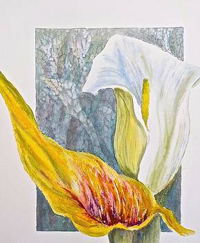 Calla Lily by Carolyn Rosenberger