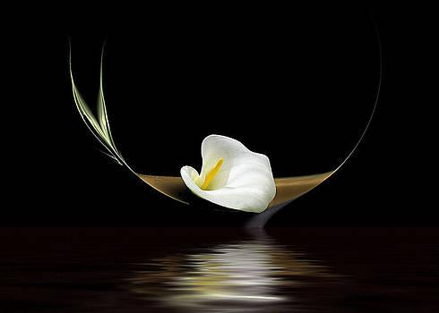 Calla Lily by Diane McCool-Babineau
