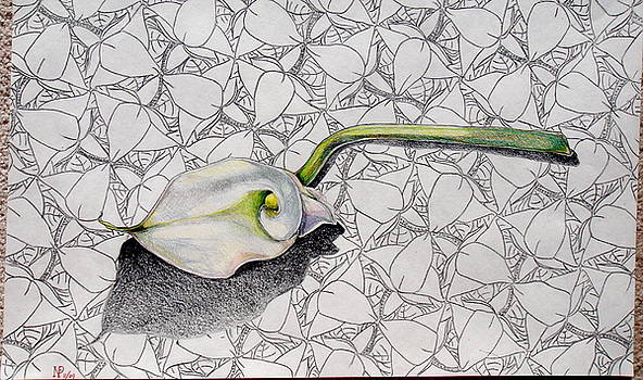 Calla Lily Dissected by Neil Grotzinger
