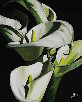 Calla Lily by Kim Selig