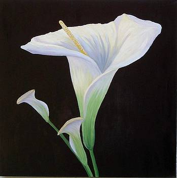 Mary Erbert - Calla Lily X