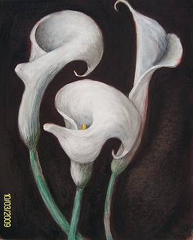 Mary Erbert - Calla Lily XXI