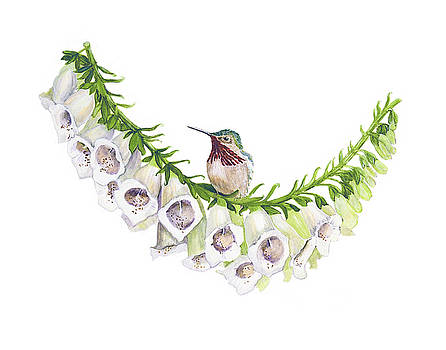 Calliope Hummingbird on Foxglove by Linda Wolfe