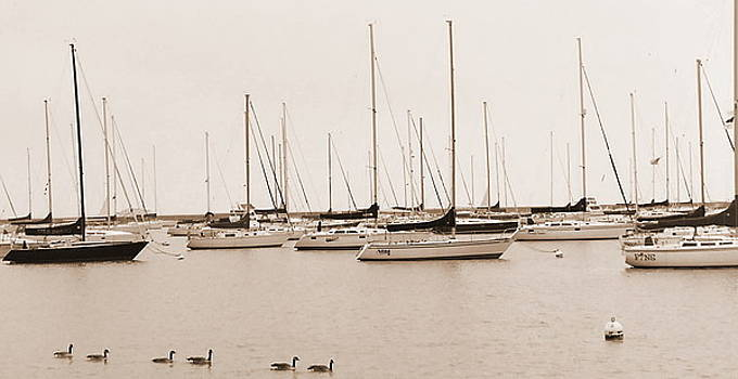 Calm Sail by Jackie Bodnar
