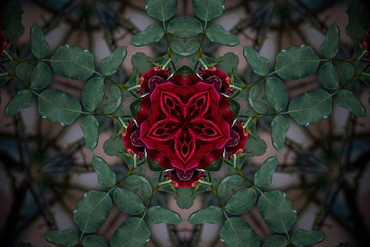 Calming Mind  by Luis Rosario