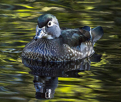 Calmness on the Water by Sheldon Bilsker