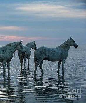 Camargue Horses Waiting at Sunset by Carol Walker