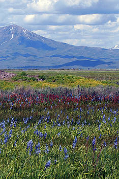 Camas Prairie in Bloom by Michelle Halsey