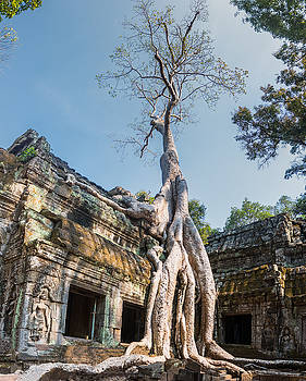 Cambodia Angkor Wat Tree Roots by Cory Dewald