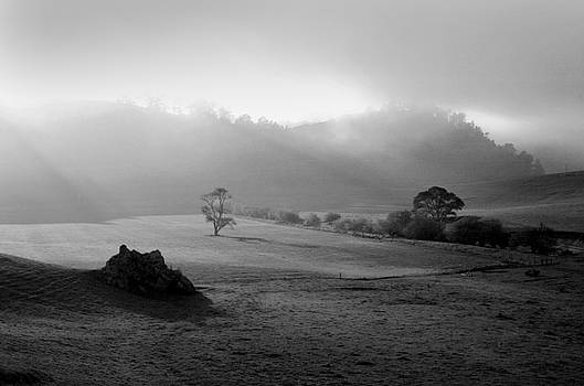 Cambria Fog by Greg Iger