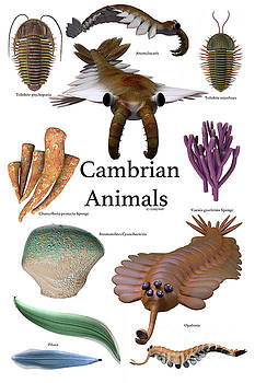 Cambrian Animals by Corey Ford