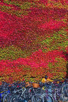 Cambridge autumn  by Andrew Michael