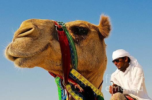 Camel in the Desert by Kate Stoupas