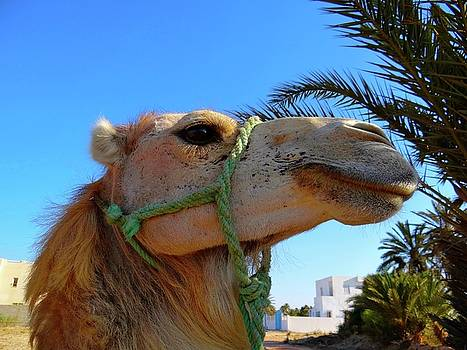 Camel profile by Exploramum Exploramum