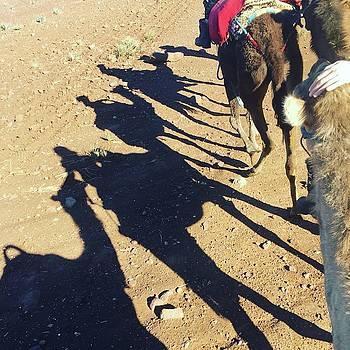 Camel Shadows by Lori Fitzgibbons