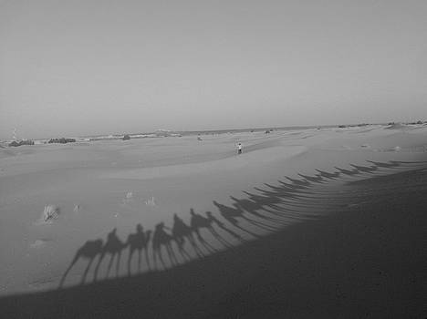 Camel shadows - shades of grey by Exploramum Exploramum