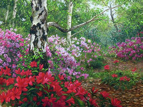 Camellia Forest, Descanso Gardens by Johanna Girard