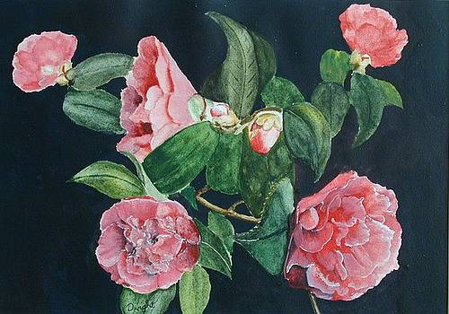 Camellias by Dwight Williams