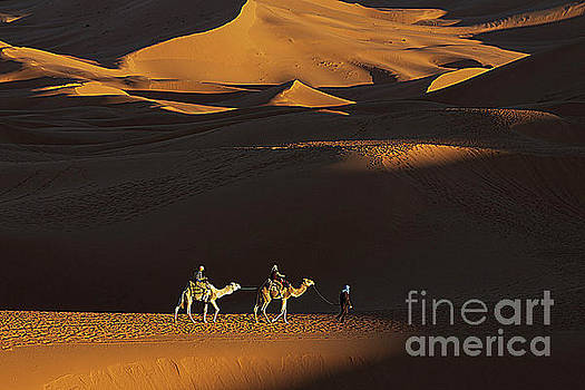 Camels in the Sahara by Jim Wright