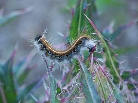 Camera Bug by Susan Anderson