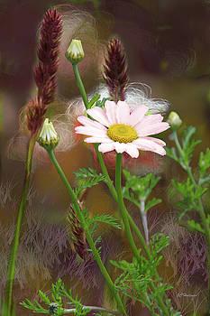 Camomile and Grass by Joe Halinar