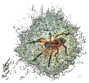 Sam Davis Johnson - Camouflage Spider