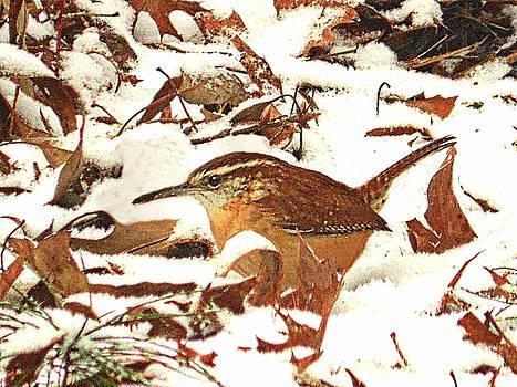 Joe Duket - Camouflaged Carolina Wren