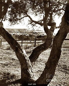 California Views Mr Pat Hathaway Archives - Camp Ord, Tents through Oak Trees, Monterey, Calif. 1939